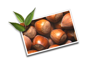 Informations on hazel nuts