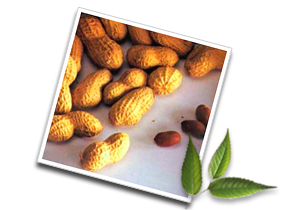 Informations on peanuts